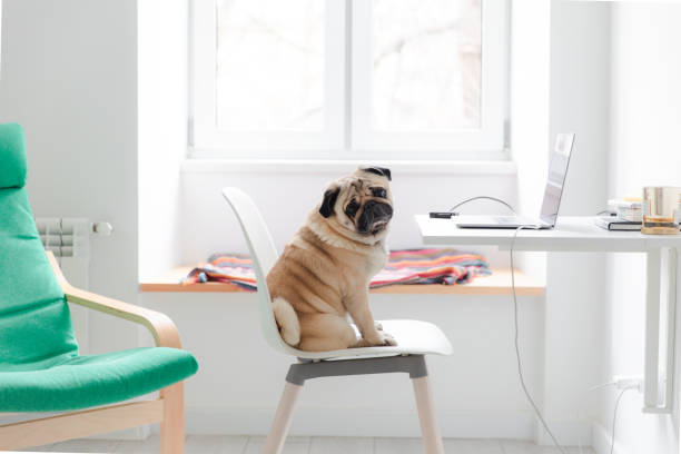 Having a great working day at home with dog stock photo