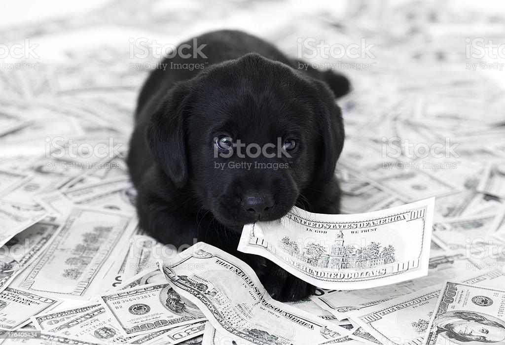 Wenn ein Haustier können teuer sein Lizenzfreies stock-foto