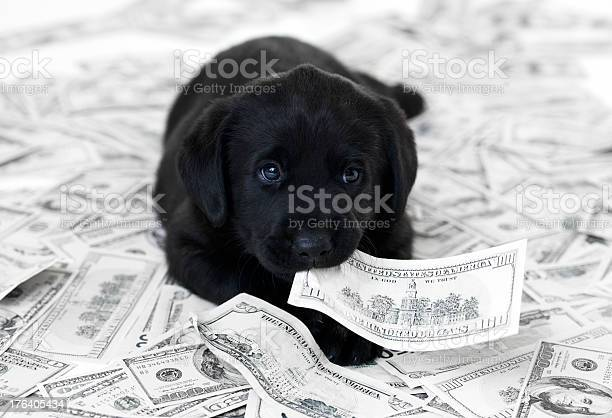 Having a pet can be expensive picture id176405434?b=1&k=6&m=176405434&s=612x612&h=4tljuq1bkvh4plqd8oy8p9wips5uerdnzufl wxigbk=