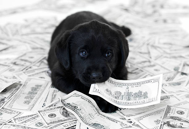 Having a pet can be expensive stock photo
