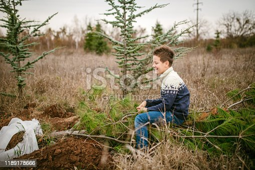 Young boy playing around in pine tree forest