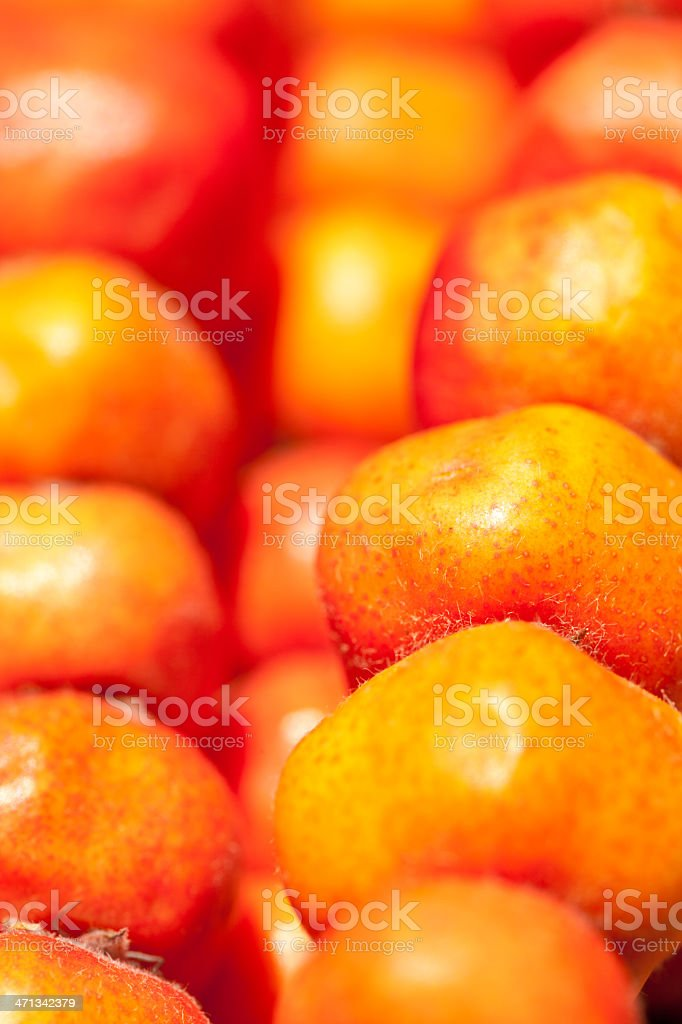 Haw royalty-free stock photo