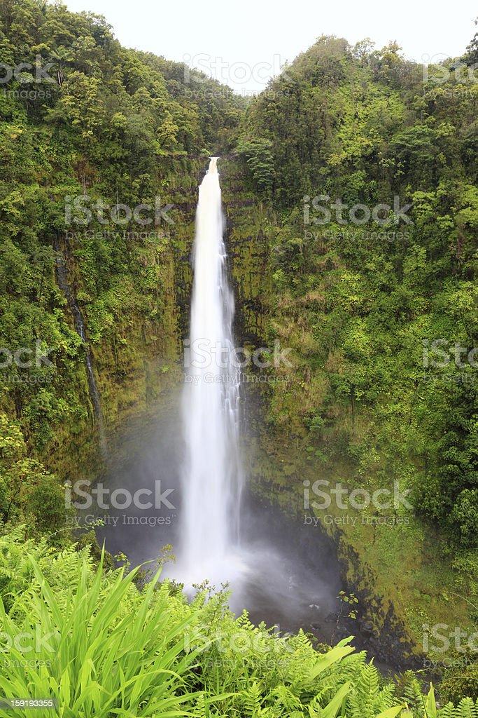 Hawaii Akaka Falls - Hawaiian waterfall royalty-free stock photo