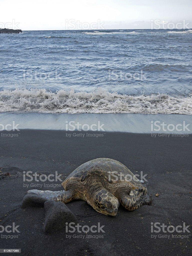 Hawaii Black sand beach stock photo