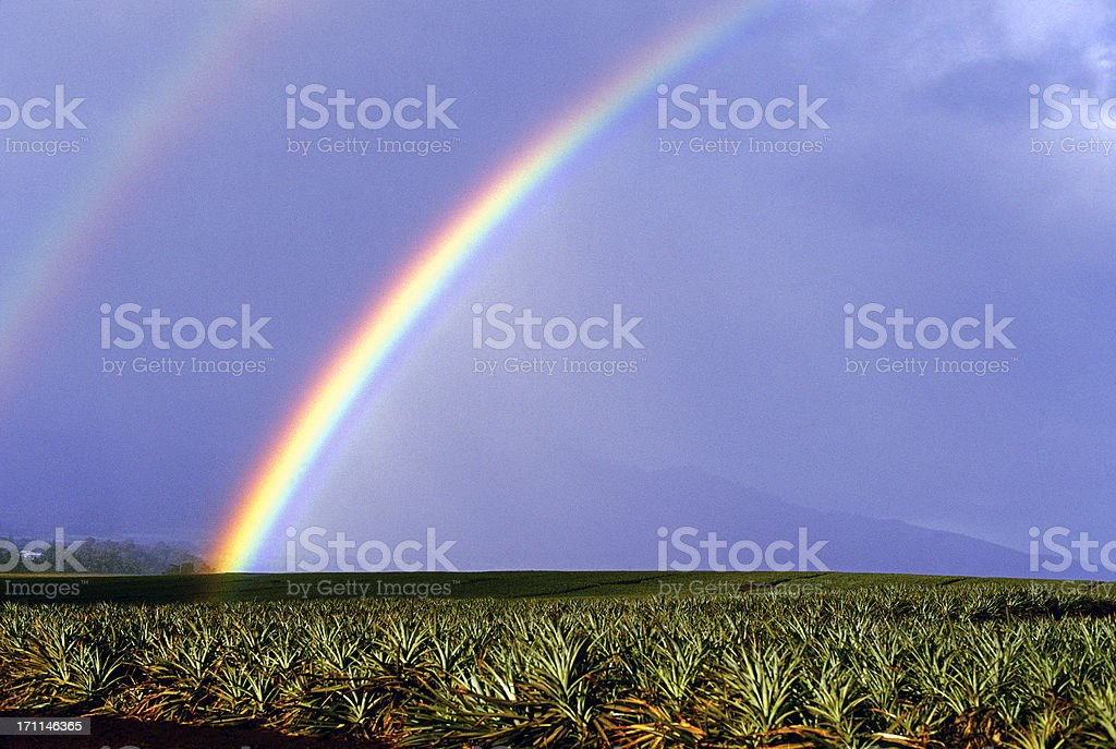 USA Hawaii O'ahu, Rainbow over pineapple fields. royalty-free stock photo