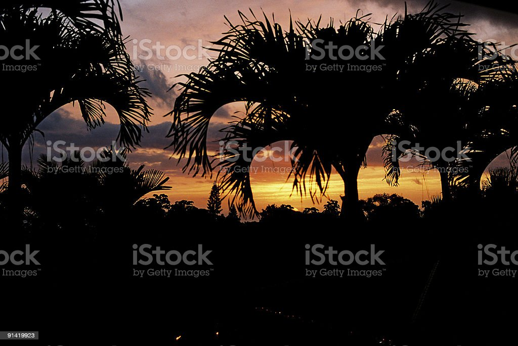 Hawaii palm sunset royalty-free stock photo