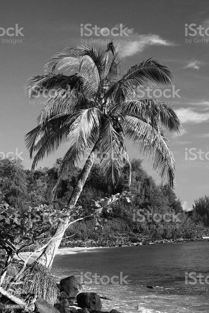Hawaii Palm tree  tropical Black and white royalty-free stock photo