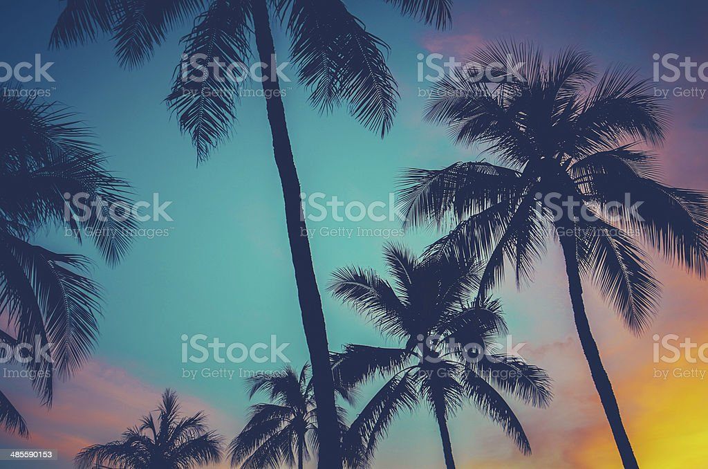 Hawaii Palm Trees At Sunset stock photo