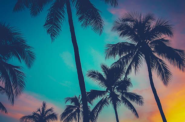 Hawaii Palm Trees At Sunset stock photo
