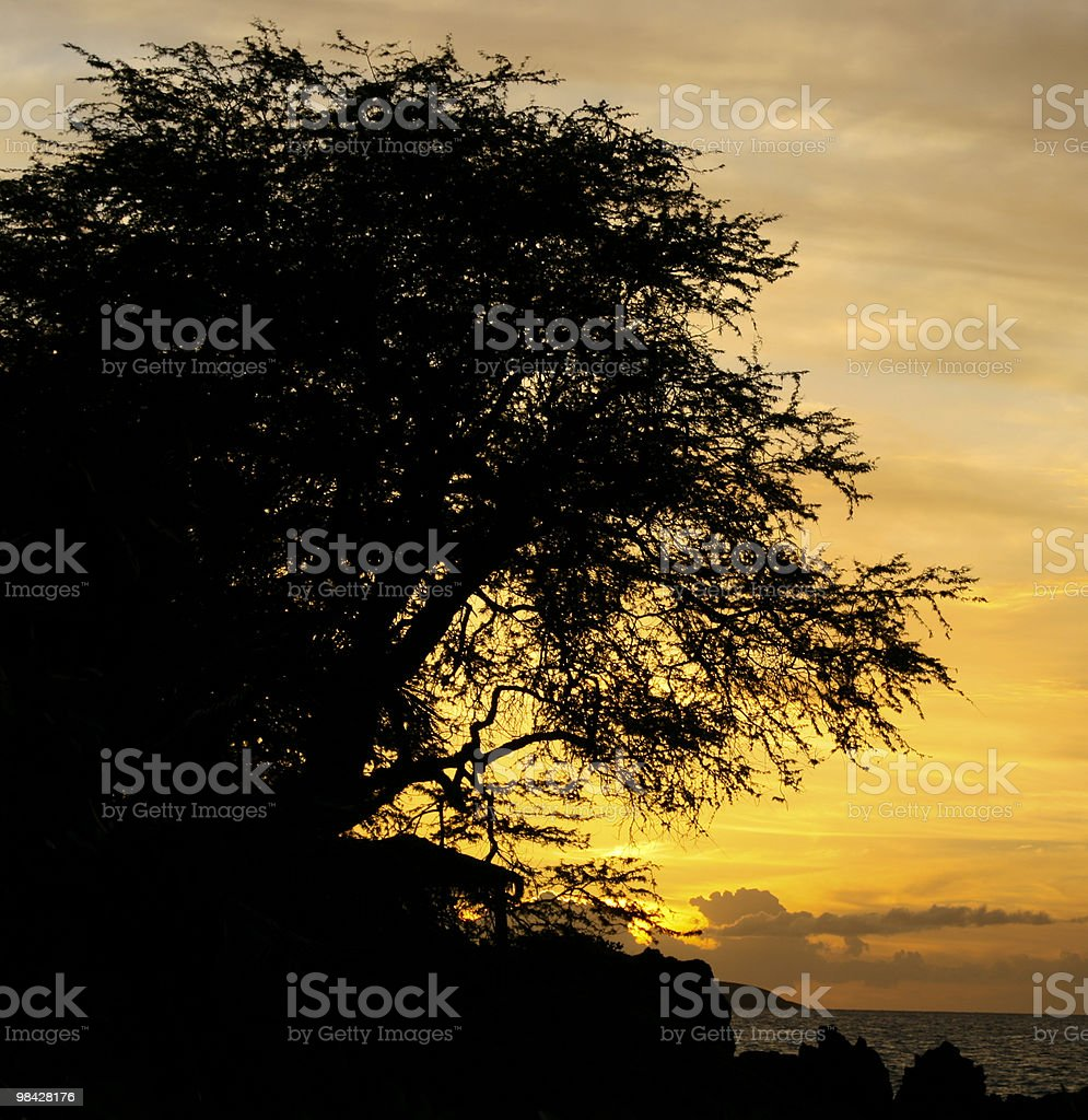 Hawaii tree at sunset royalty-free stock photo