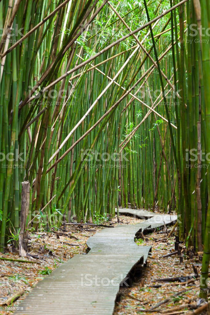 Hawaiian Bamboo Forest, Maui royalty-free stock photo
