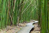 Way through a bamboo forest on the Pipiwai Trail to Waimoku Falls in Maui, Hawaii.http://www.michael-utech.de/files/Lightbox_Kauai.jpg