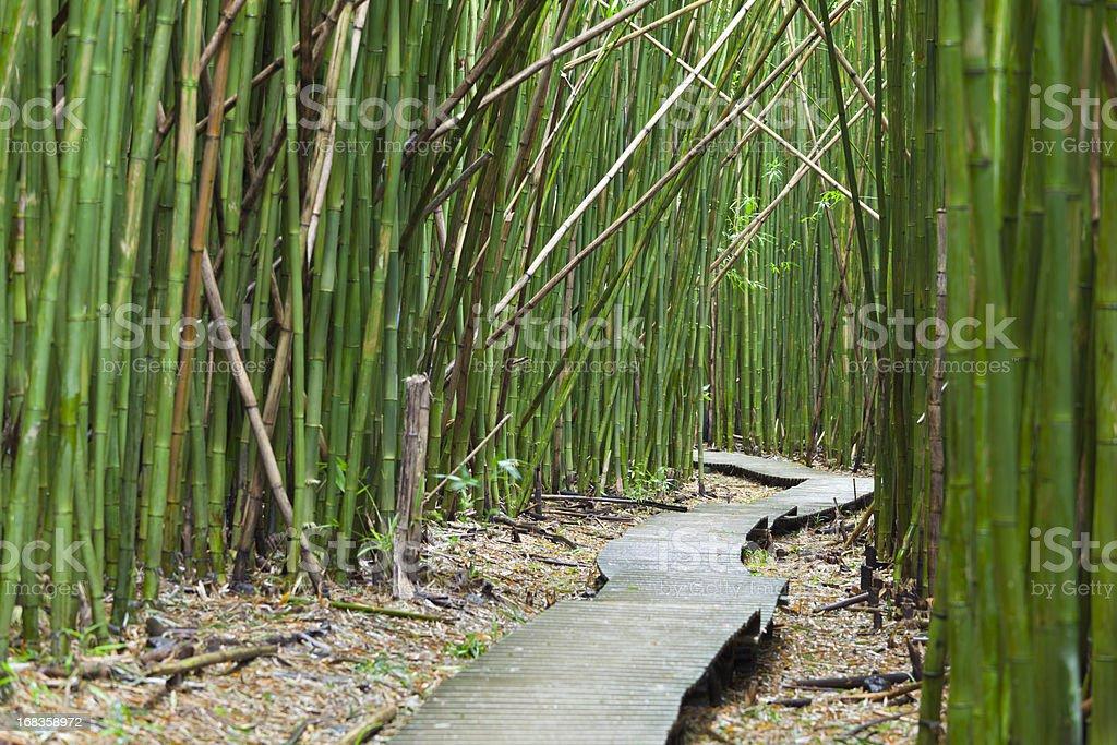 Hawaiian Bamboo Forest, Maui stock photo