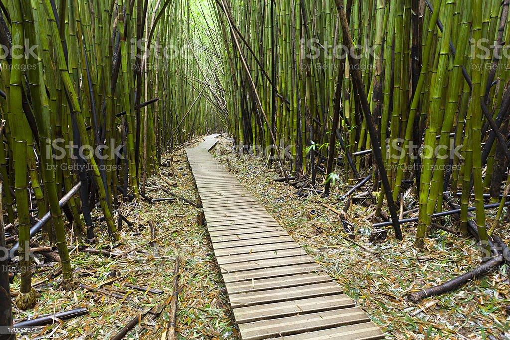 Hawaiian Bamboo Forest, Maui royalty-free stock photo
