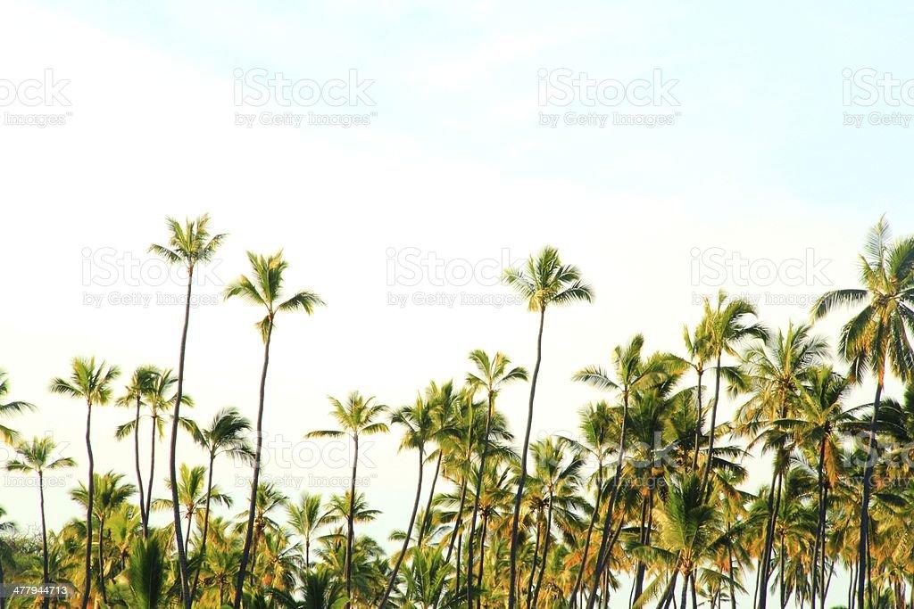 Hawaiian Beach and Palm Trees stock photo