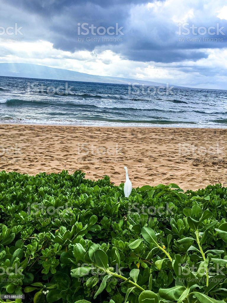 Hawaiian beach, Maui foto stock royalty-free