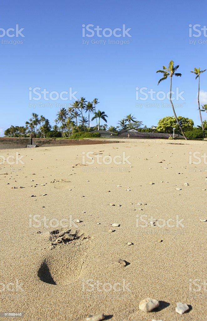 Hawaiian beach royalty-free stock photo