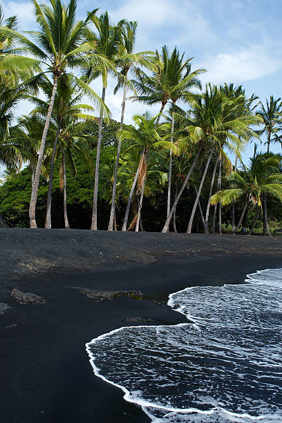 """Hawaiian Black Sand Beach """"The black sand of Punalu'u Beach Black Sand State Park is popular with residents, tourists and sea turtles. Punalu'u Beach Park is located off Hwy 11 on the south shore, south of the town of Hilo. Shot with Canon 1D Mark III."""" black sand stock pictures, royalty-free photos & images"""