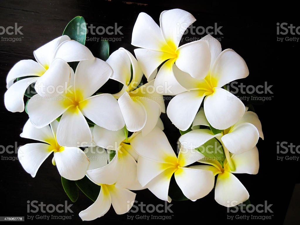 Hawaiian flowers with black background stock photo more pictures hawaiian flowers with black background royalty free stock photo only from istock izmirmasajfo