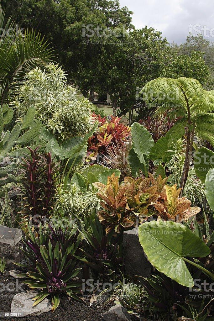 Hawaiian Foliage royalty-free stock photo