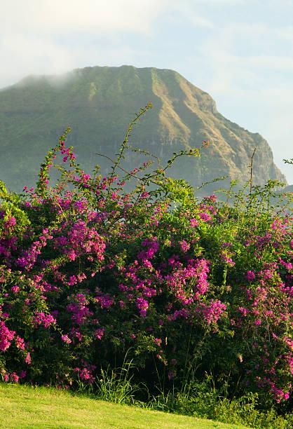 hawaiianischer landschaft. - ebersberg stock-fotos und bilder