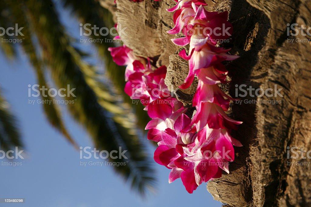 hawaiian lei on palm tree royalty-free stock photo