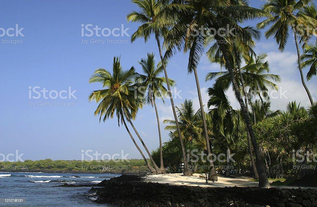Hawaiian Palm Trees and Beach royalty-free stock photo