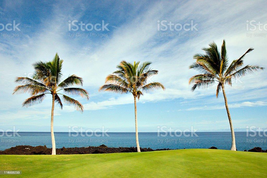 Hawaiian Palms and Beach royalty-free stock photo