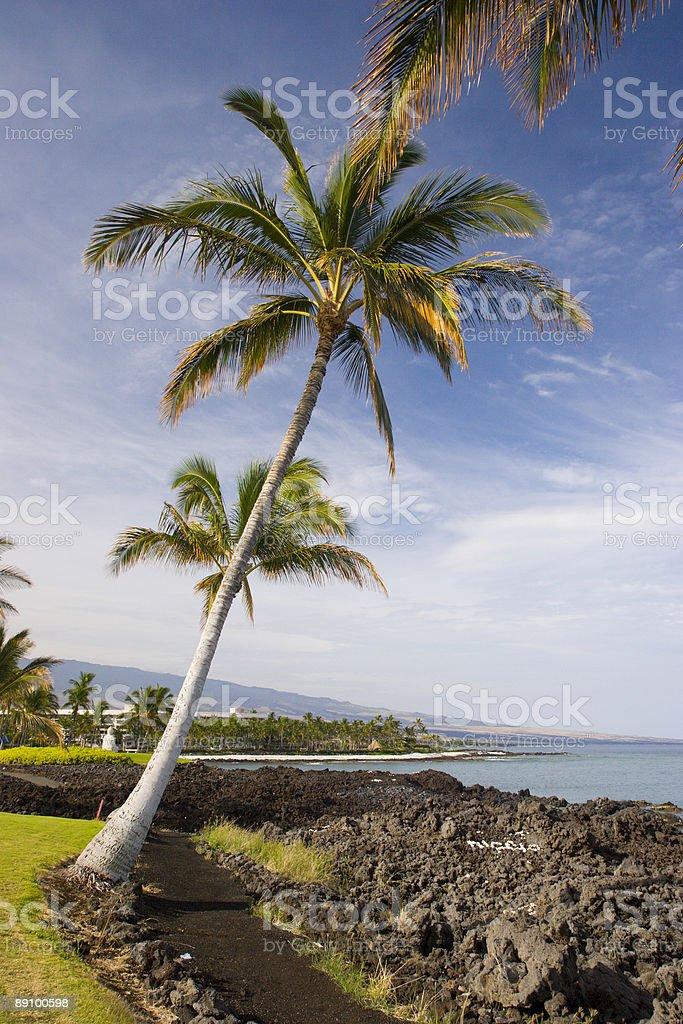 Hawaiian Palms y la playa foto de stock libre de derechos