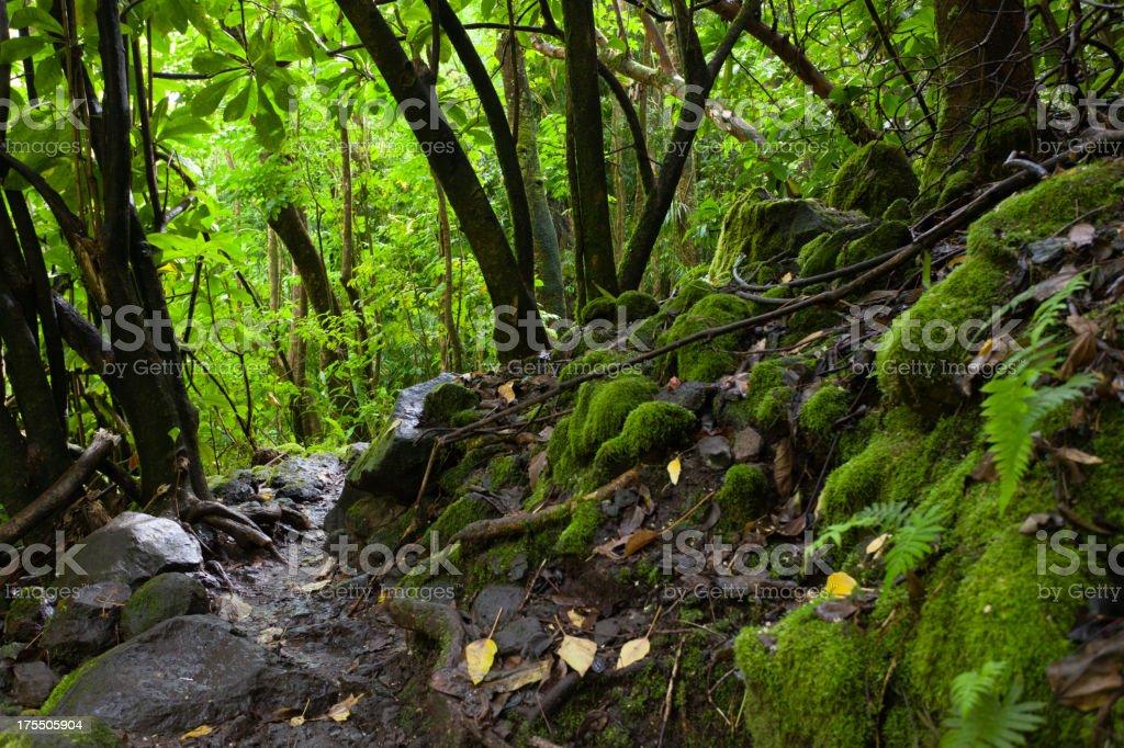Hawaiian Rainforest, Maui stock photo