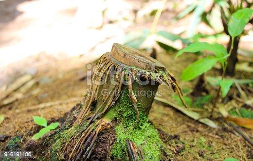 istock Hawaiian rainforest 916191180