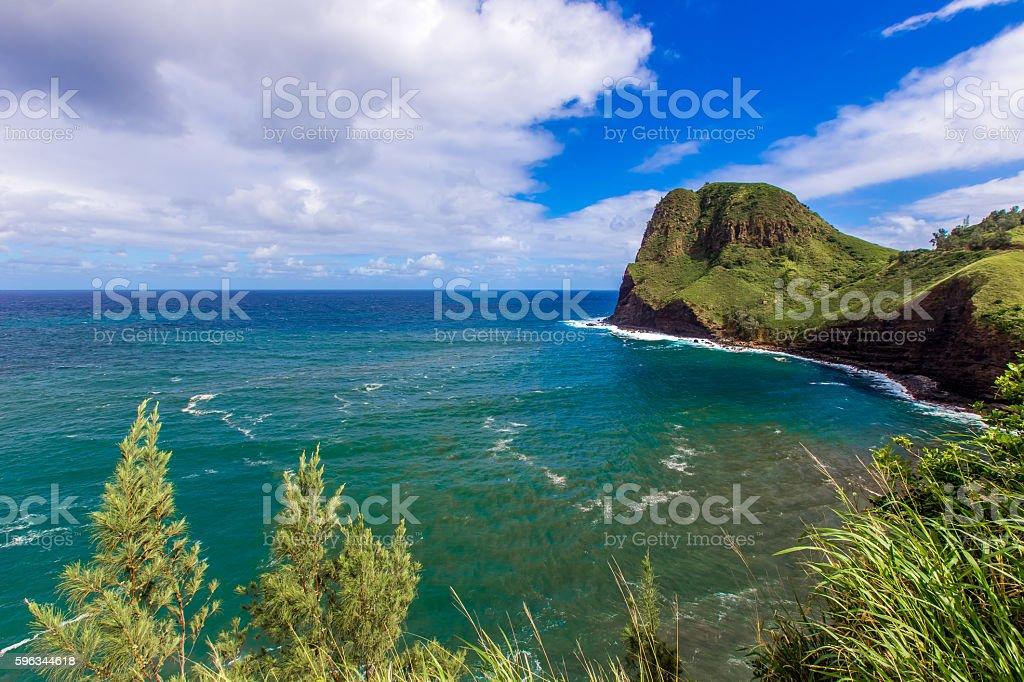 Hawaiian rock beach with trees Lizenzfreies stock-foto