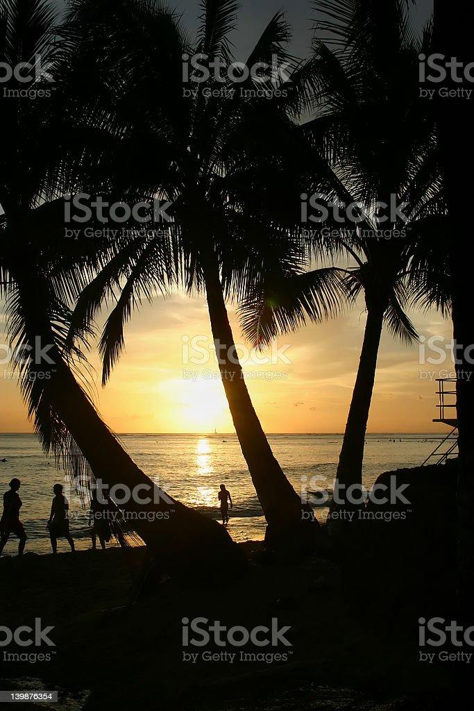 Hawaiian sunset through trees royalty-free stock photo