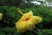 Hawaiin Floral Beauty