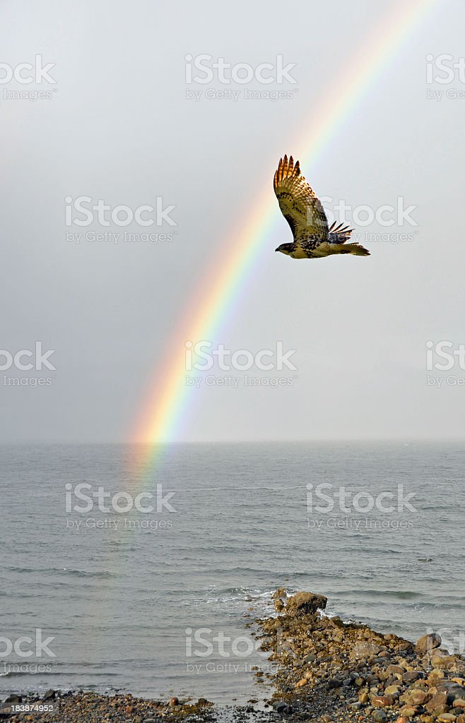 Hawk And Rainbow stock photo