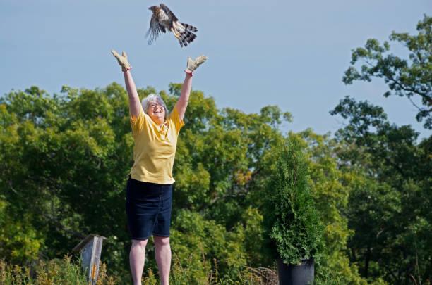 Hawk Flies Free at Nature Center stock photo