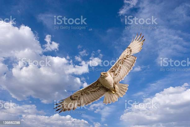 Hawk flight picture id139880298?b=1&k=6&m=139880298&s=612x612&h=7br3gjgmibt1mfvfjtn4djyq2leoyzhkvlf0uuwotk0=