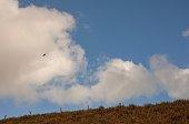 Hawk flies in the sky on a rural scene