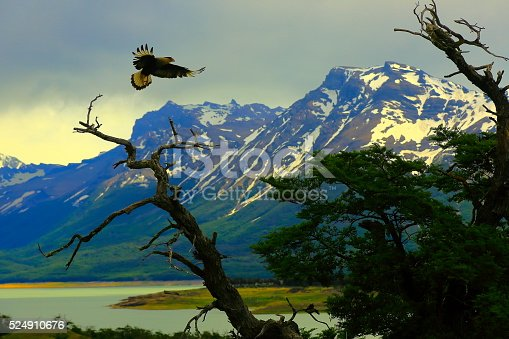istock Hawk flying, Patagonia Argentina near El Calafate, Perito Moreno Glacier 524910676