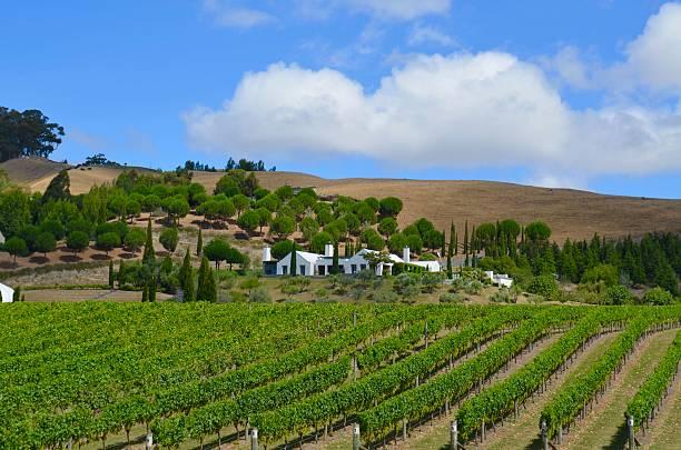 Hawkes Bay Winery stock photo