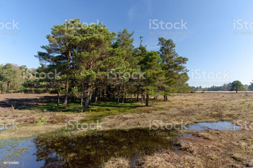 Hawkhill Inclosure stock photo
