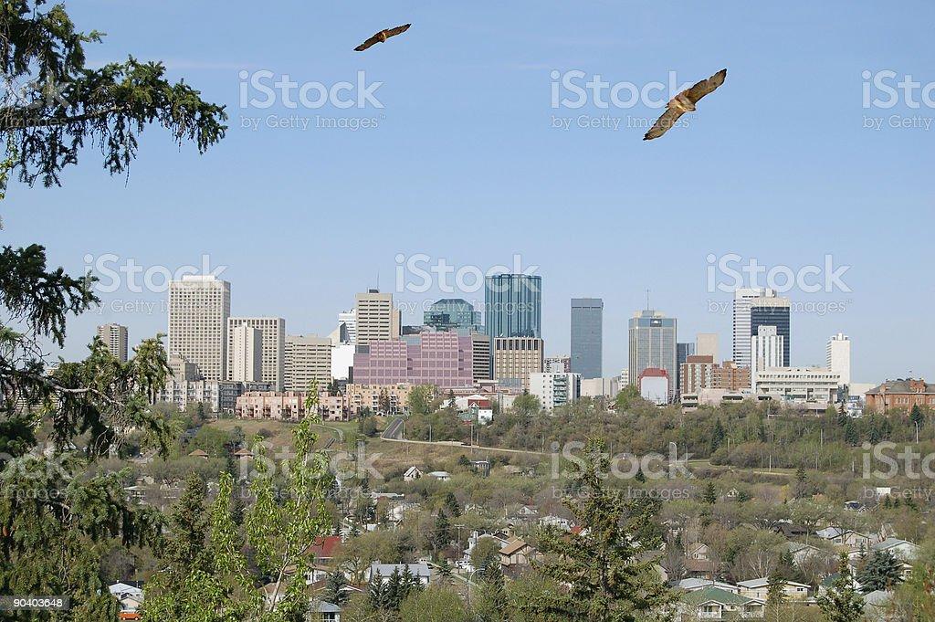 Hawks Over Edmonton royalty-free stock photo