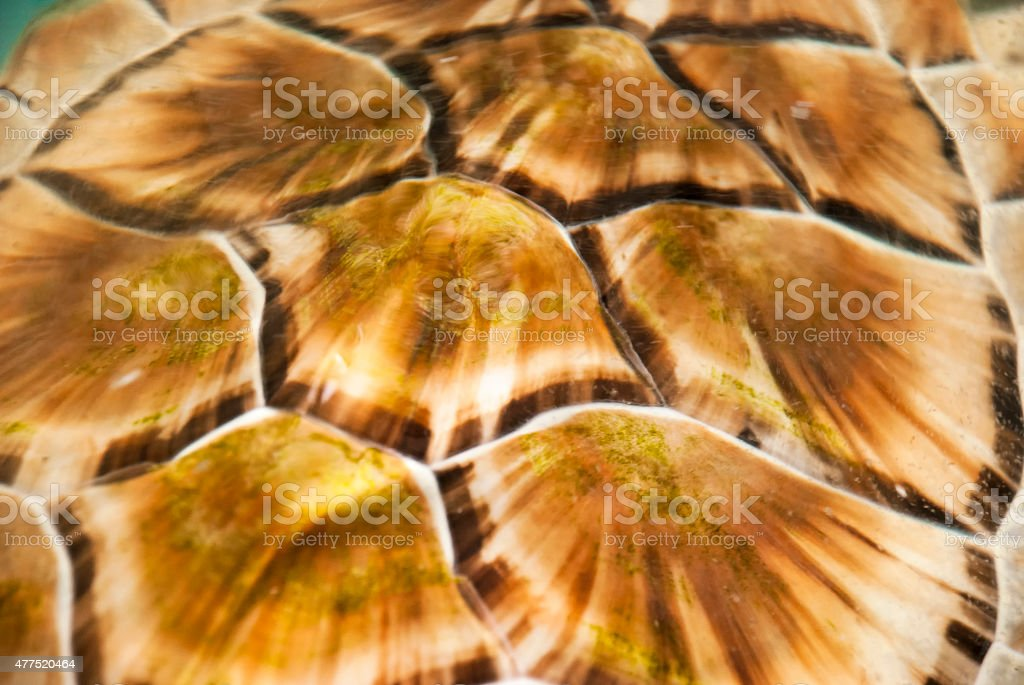Hawksbill background stock photo
