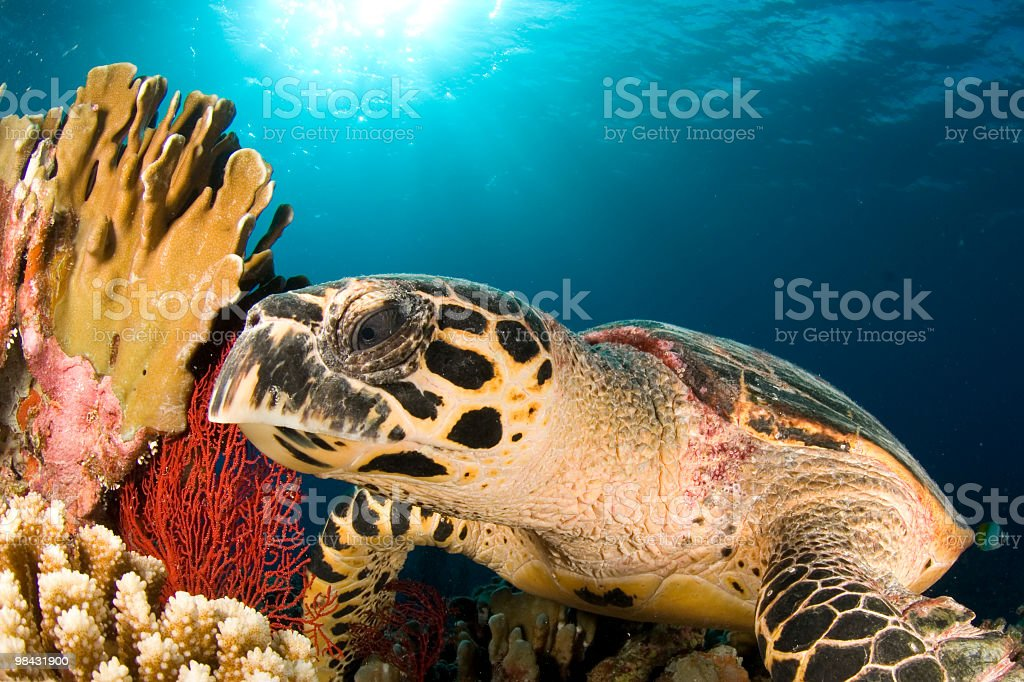 hawksbill close profile royalty-free stock photo