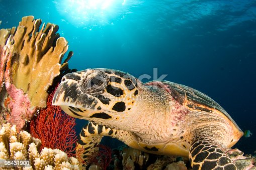 Hawksbill Close Profile Stock Photo & More Pictures of Animal Wildlife