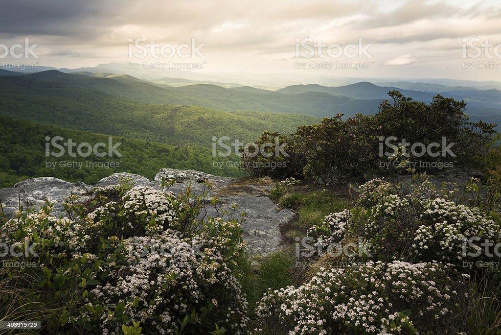 Hawksbill in Bloom stock photo