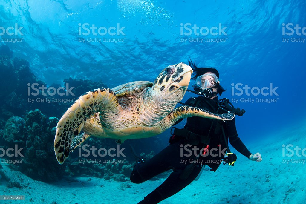 Hawksbill inspection stock photo