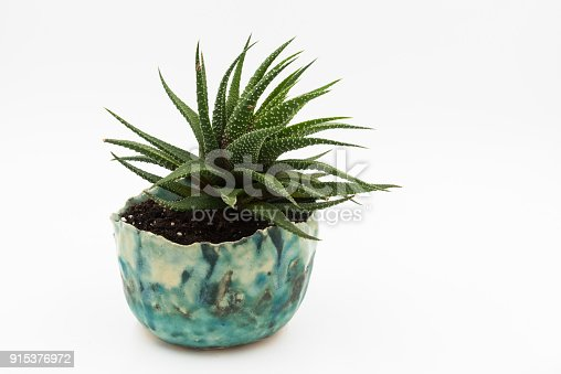 Haworthia cactus planted in blue hand made bowl on white