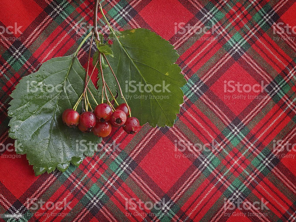 Hawthorn berries on a checkered cloth royalty-free stock photo