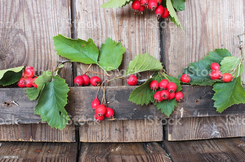 Hawthorn berries on wooden rustic background stock photo